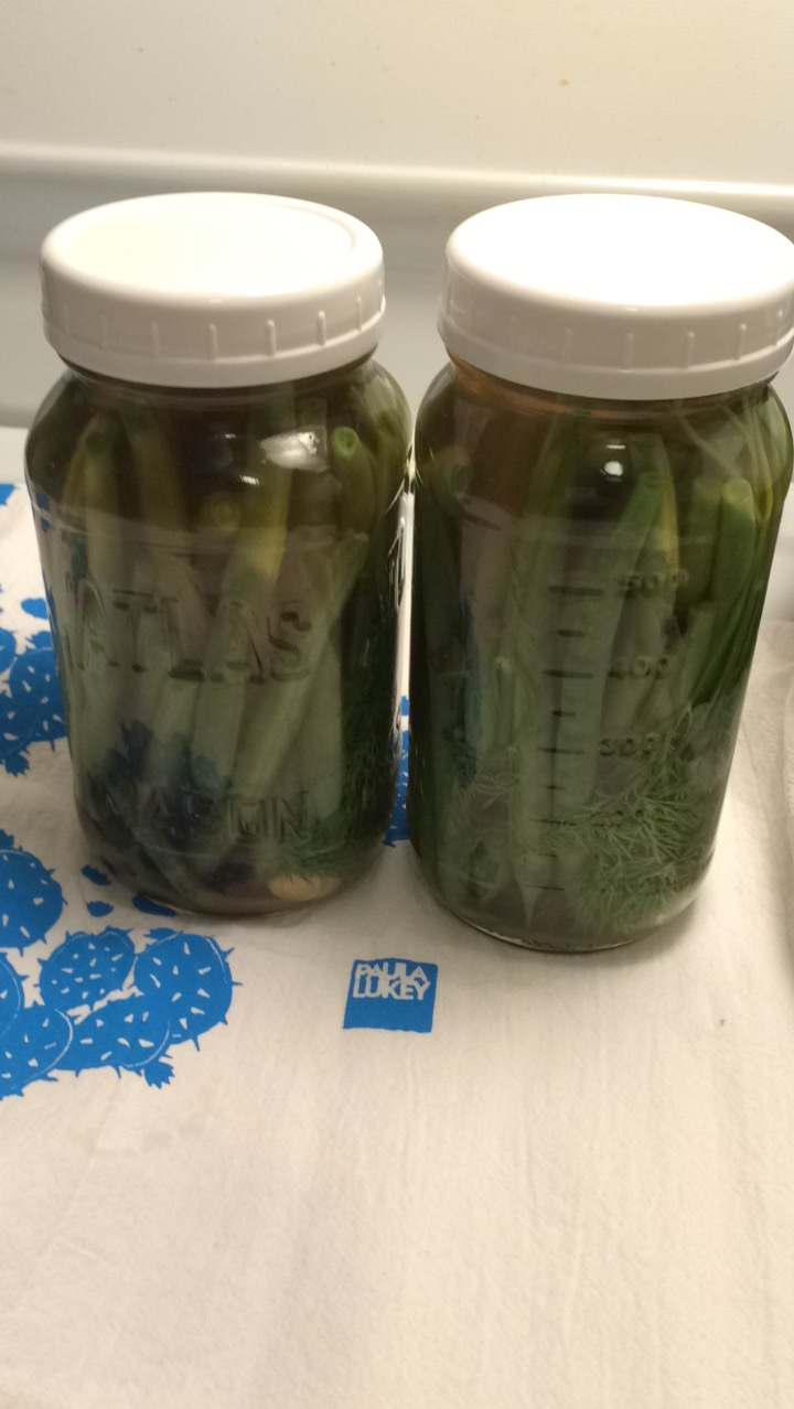 Dilly Beans and Quickles aka Quick Pickles Experiment #1